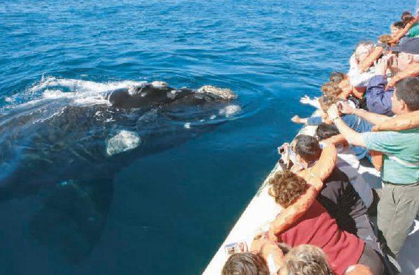 Avistaje de ballenas en Peninsula Valdes