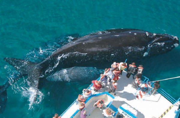 Avistaje de ballenas en Puerto Madryn