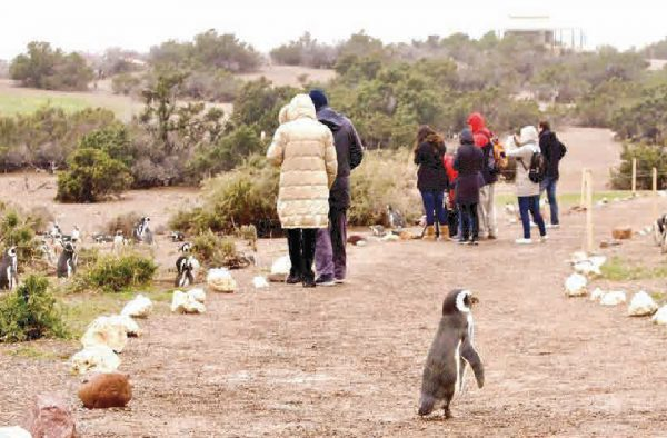 Excursion a Punta Tombo
