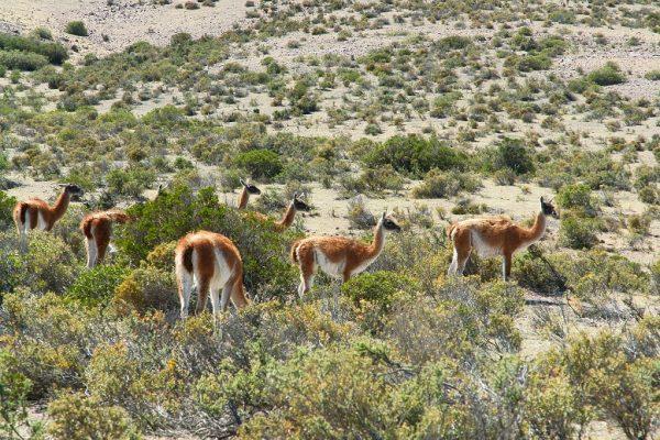 Fauna en Puerto Madryn