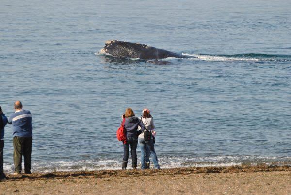 Avistaje costero de Ballenas en Puerto Madryn
