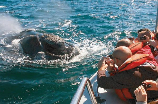 Excursion solo ballenas en Puerto Madryn