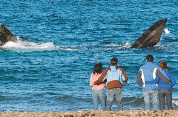 Avistaje costero de ballenas en El Doradillo