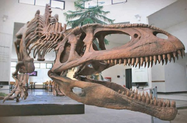 Excursion al museo Paleontologico en Chubut