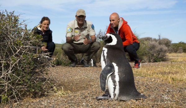Pinguinos en Estancia San Lorenzo