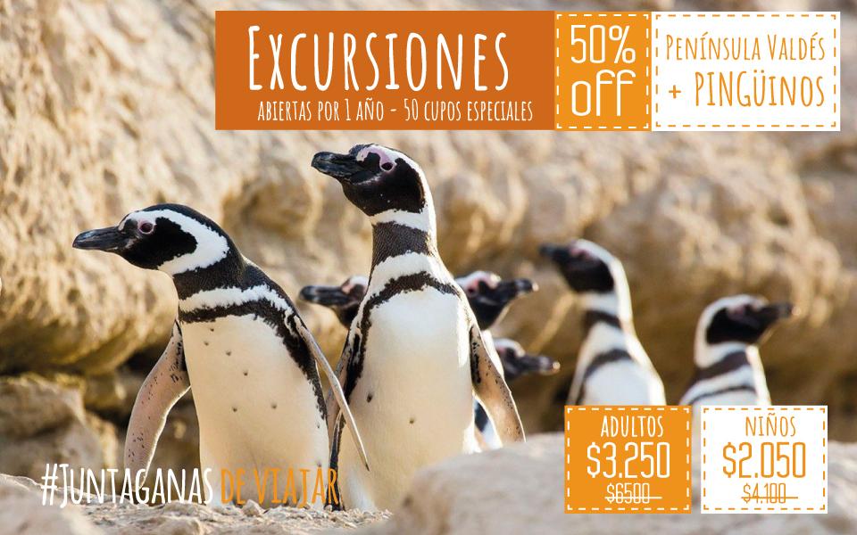 Península Valdés Norte C/ Observación De Pingüinos En Estancia San Lorenzo (50% Bonificado/ 50 Cupos )
