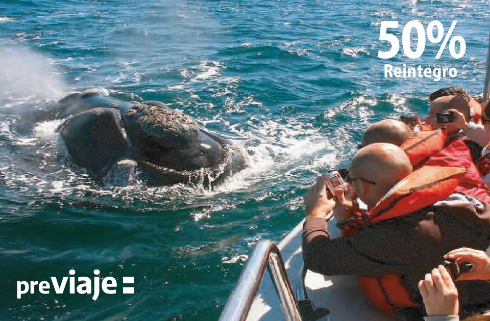 Península Valdes Sur + Avistaje De Ballenas Embarcado